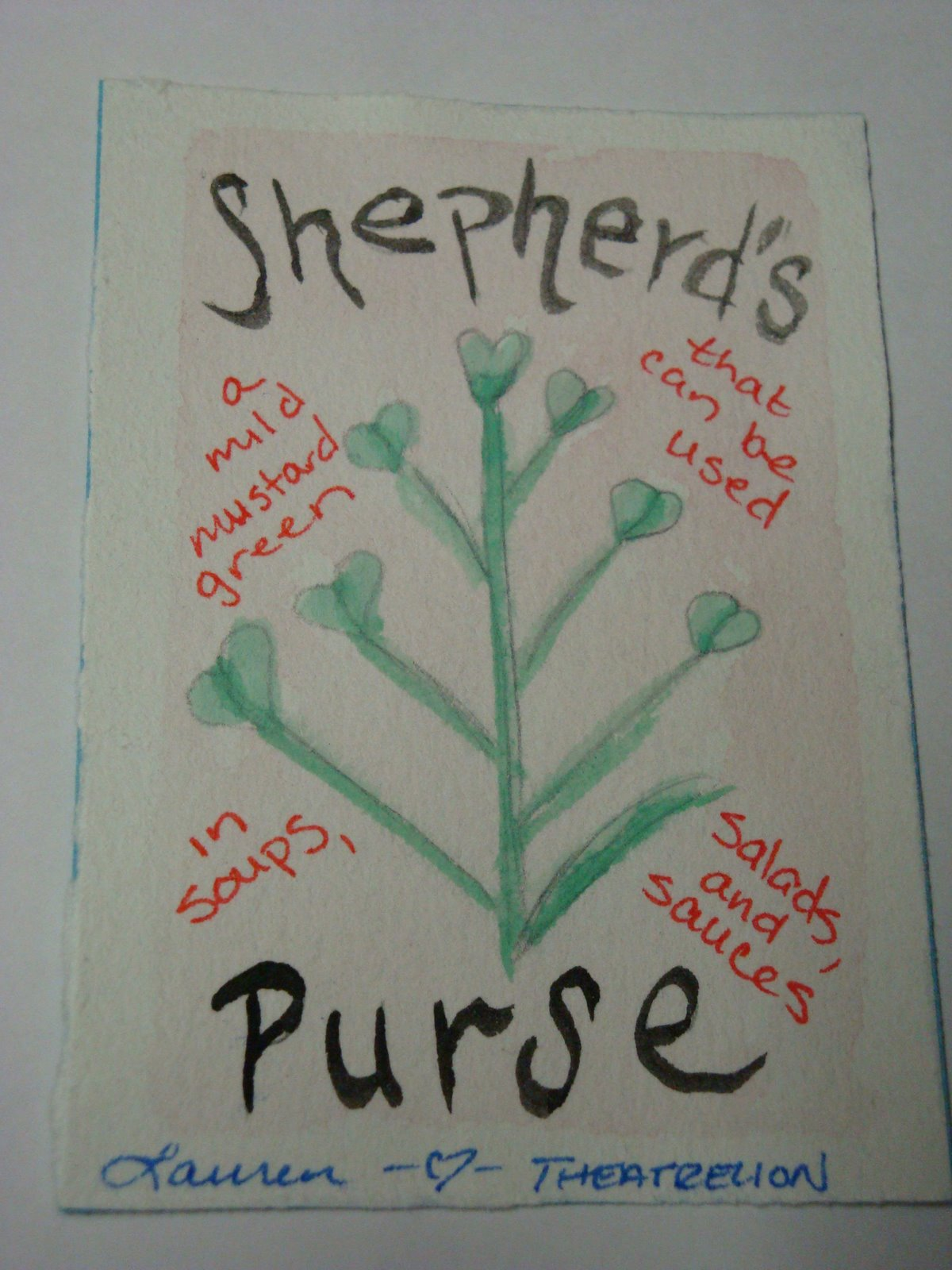 [shepherd]