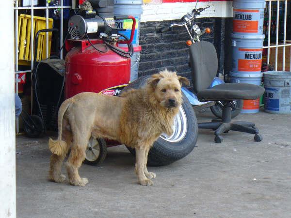 [dog_lion2.jpg]