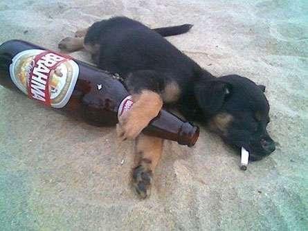JAZZigo - Parte 3 Cachorro-bebado
