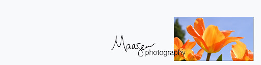 Maasen Photography