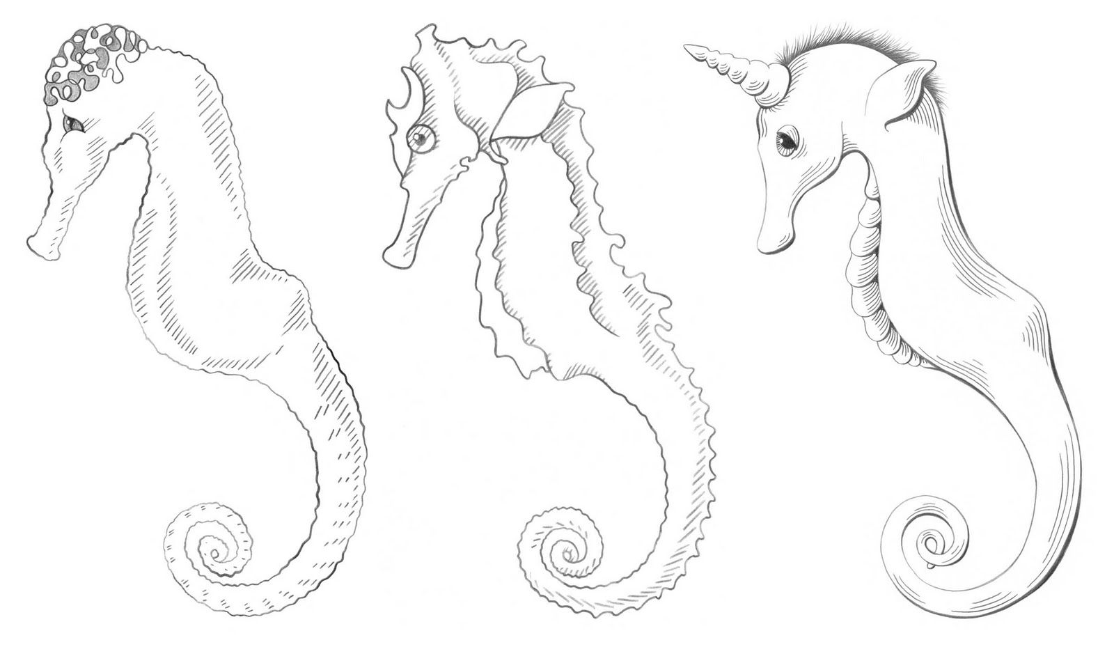 Simple seahorse drawing for How to draw a simple seahorse