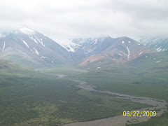 Scenery in Denali National Park