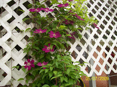 The clematis on my back deck