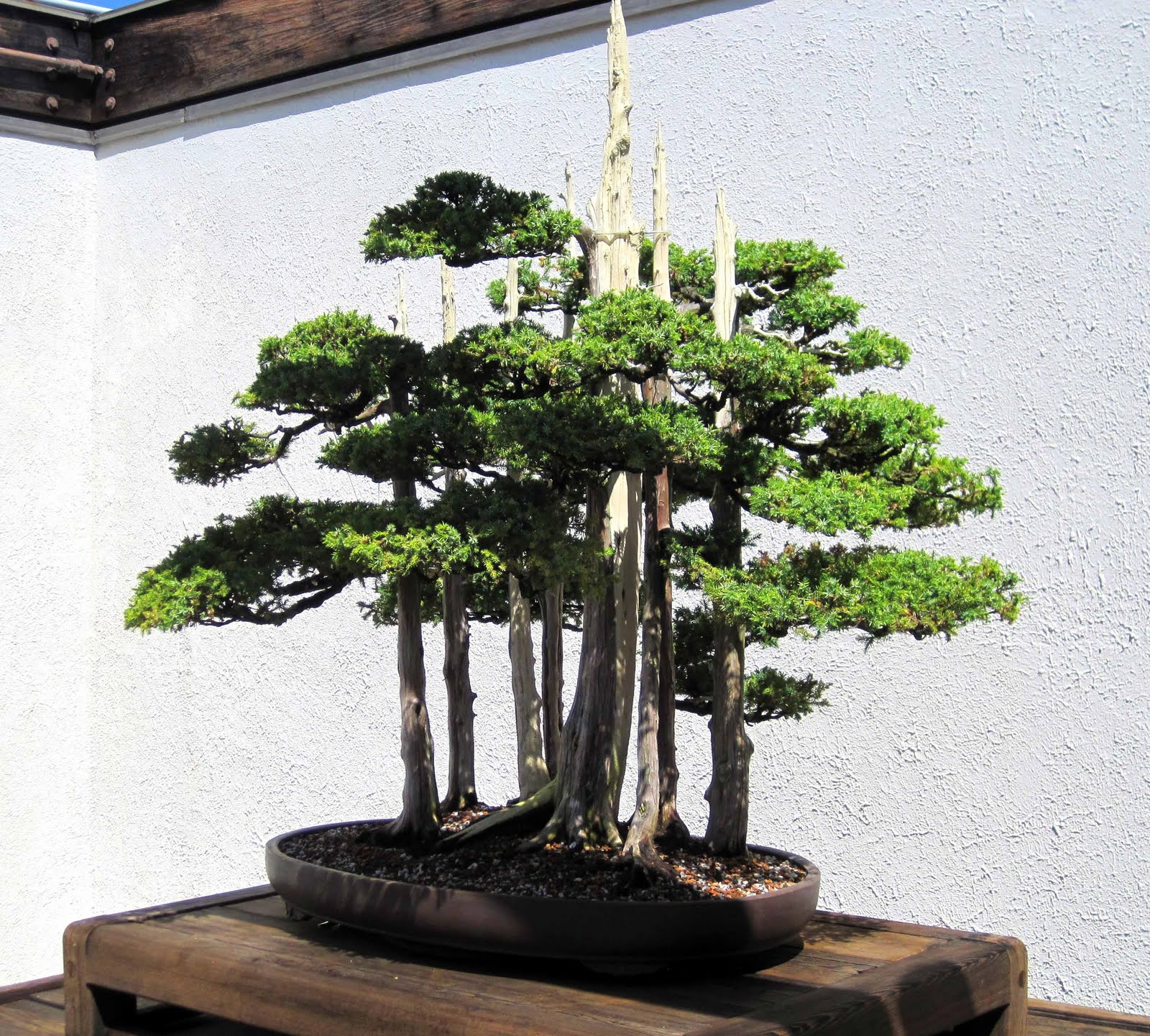 Architecture Style Bonsai Garden