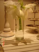 Nu blommar amaryllisen