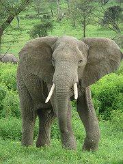 Animales terrestres*