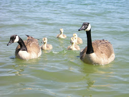 Take your family out for a swim!