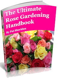 Best Rose Growing Guide
