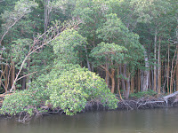 Closeup of mangrove swamp