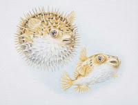 Grabado de un pez globo