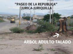 DESTROZOS DE ARBOLES ADULTOS