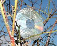 CD als Kirschenschutz, Bildquelle: www.pixelio.de