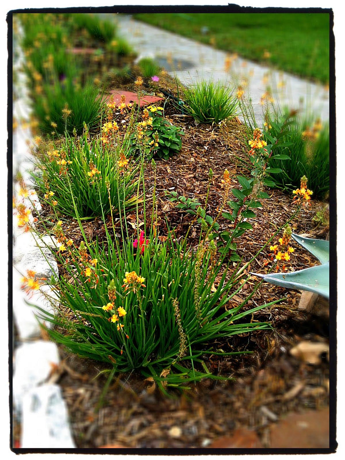 William caldera curbside garden update for Curbside garden designs