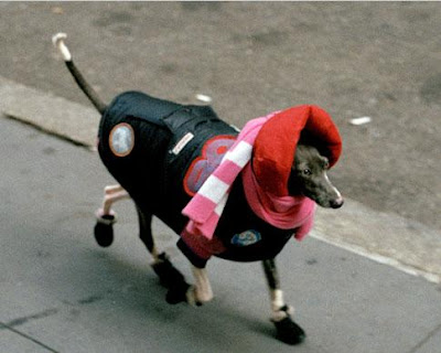 New York Dog photo by Bill Cunningham of the New York Times