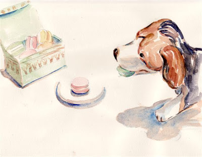 Westminster Beagles prefer French macarons