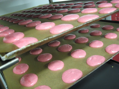 Macarons ready for the oven