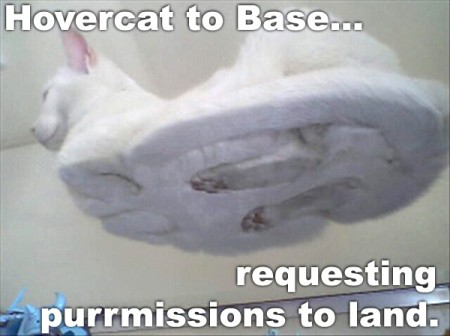 funny cat picture - funny cat pictures-lolcats funny hilarious lolcat