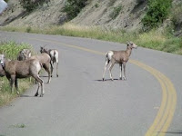 Deers on the Road