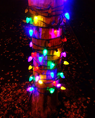 tree+trunk+lights+on+MIssion Oh Christmas Tree...  photo