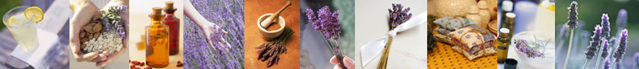 Wholesale Lavender