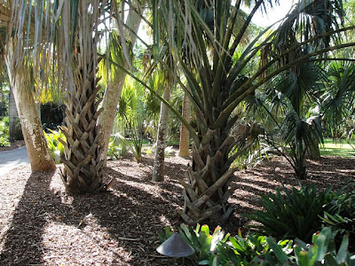 Miami south beach sofitel trip update - Fairchild tropical botanic garden hours ...