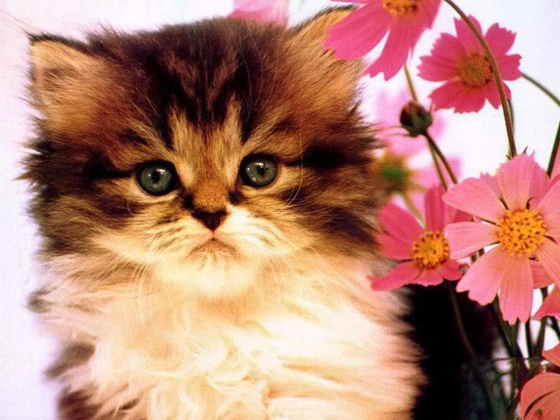 Benarkah kucing kesayangan nabi?
