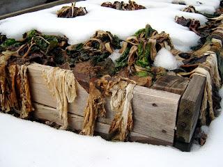 raised bed winter