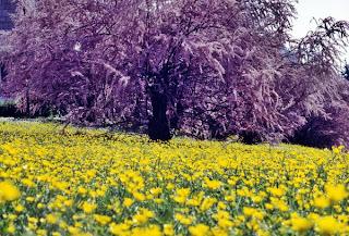poze din natura