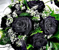 poze trandafiri