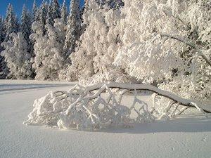 avatare ninsoare
