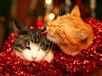 poze pisici craciun