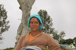 a tea estate worker