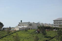 a modern tea factory