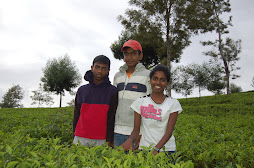 in the tea bushes of dammbatenna