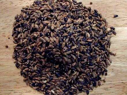 how to grow thistle seed