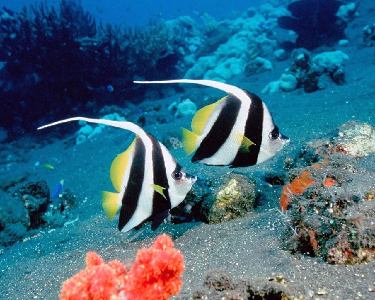 life under sea Underwater exploration and scuba diving are one of the best ways and activities you can enjoy to see the life and the magnificent beauty under the sea beneath the sea are the coral reefs teeming with fish, plants and beautiful surroundings.