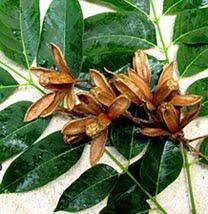 Mayan Flora Catalog