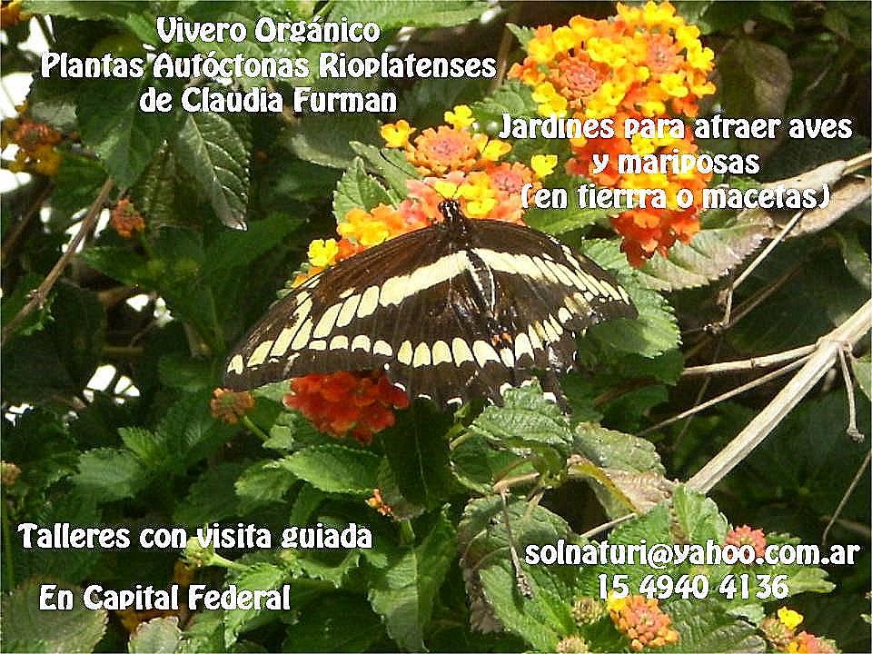 Red de vecinos en acci n plantas aut ctonas en primavera for Viveros en capital