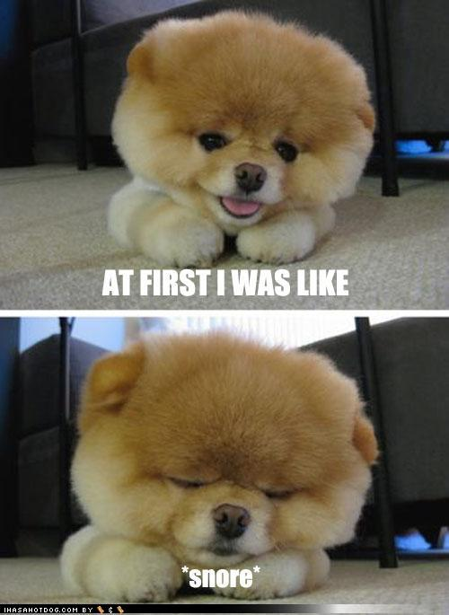 cute-puppy-pictures-at-first-i-was-like-