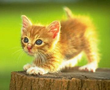 Cat Is Kucing: Cat is My First