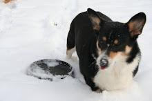 Frozen Frisbee...