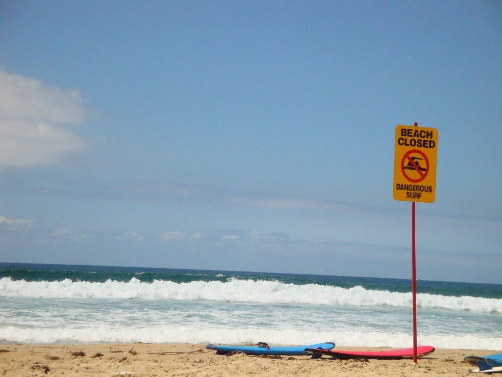 Viajar en pareja cronulla beach y meeting con frikis de - Banarse con delfines portugal ...