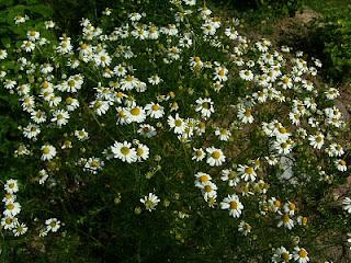 Aromapflege Woche in den Sommerferien/Neue Termine für Herbst 2010