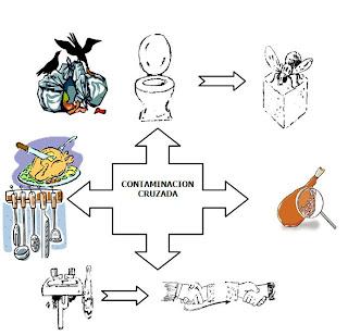 alimento contaminado