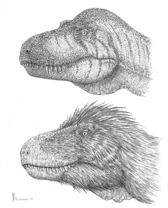 CARNIVORA - Tyrannosaurus - Tyrannosaurus Rex