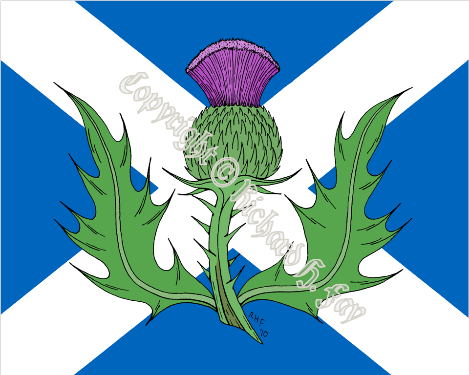 What Does a Scottish Thistle Look Like