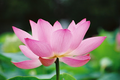 Om mani padme hum a sufic interpretation technology of the heart the human being the lotus mightylinksfo