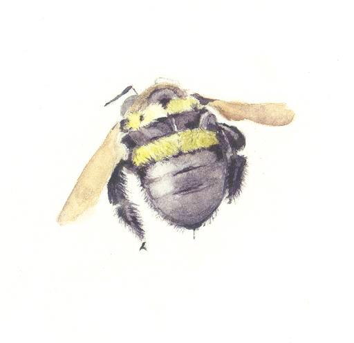 And Bees Vicki Thomas Teaches The Scientific Illustration