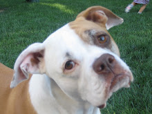 Riley Dog