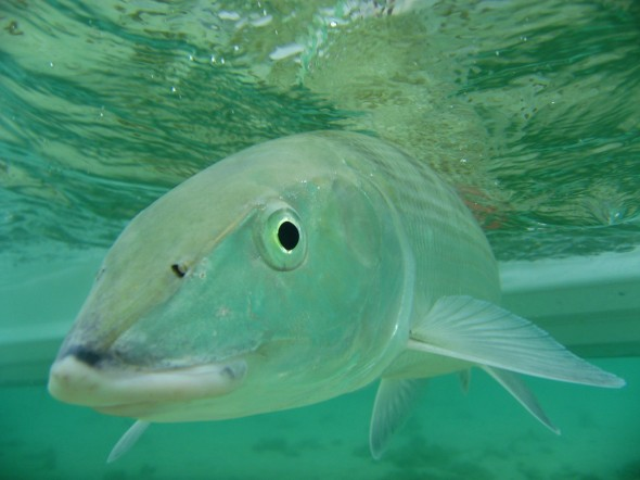 Fly fishing maui fish types for Fly fishing maui